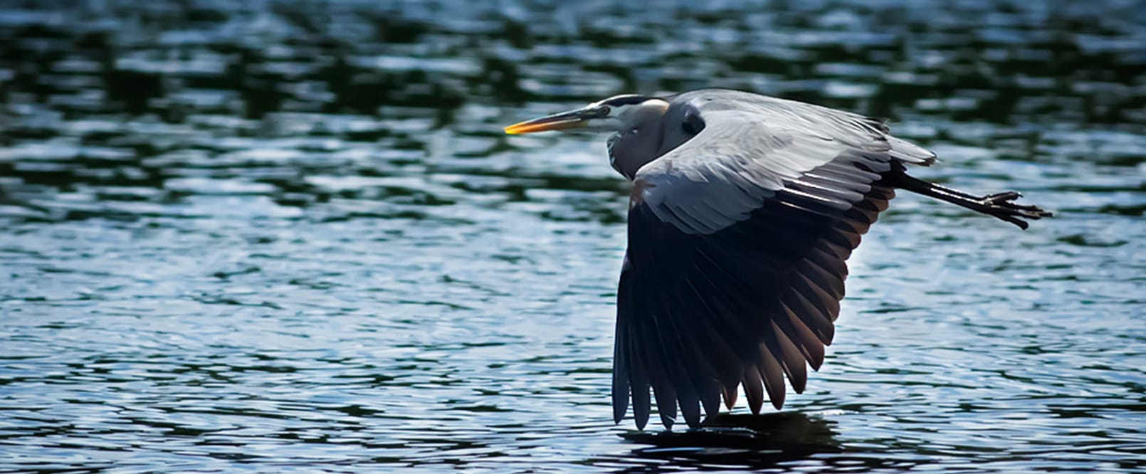 image of bird flying over water