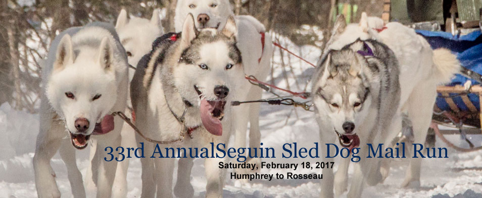 Sled dogs pulling sleigh